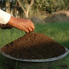 Vermicast Organic Fertilizer
