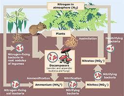 nitrogen fixation system