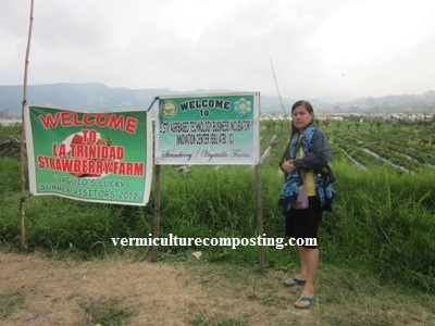 Strawberry Farm of La Trinidad