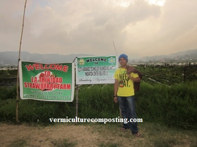Benguet Strawberry Farm