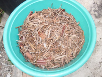 mulching with dried leaves