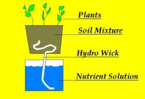 passive-hydroponics
